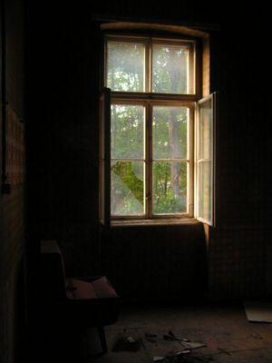 Fenster zum Leben