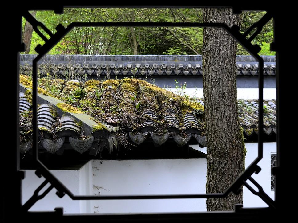 Fenster zum Moosdach