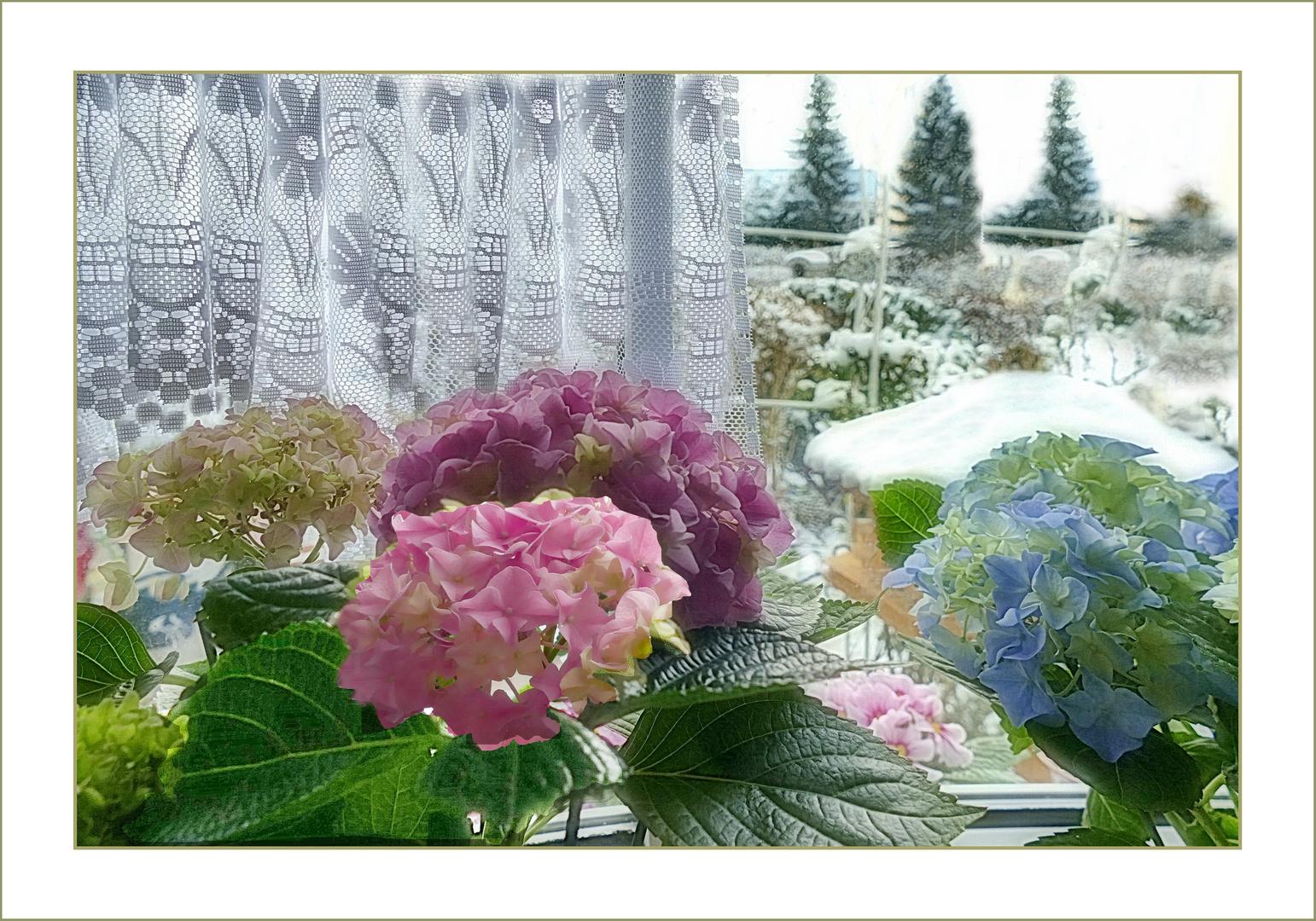 Fenster zum Wintergarten