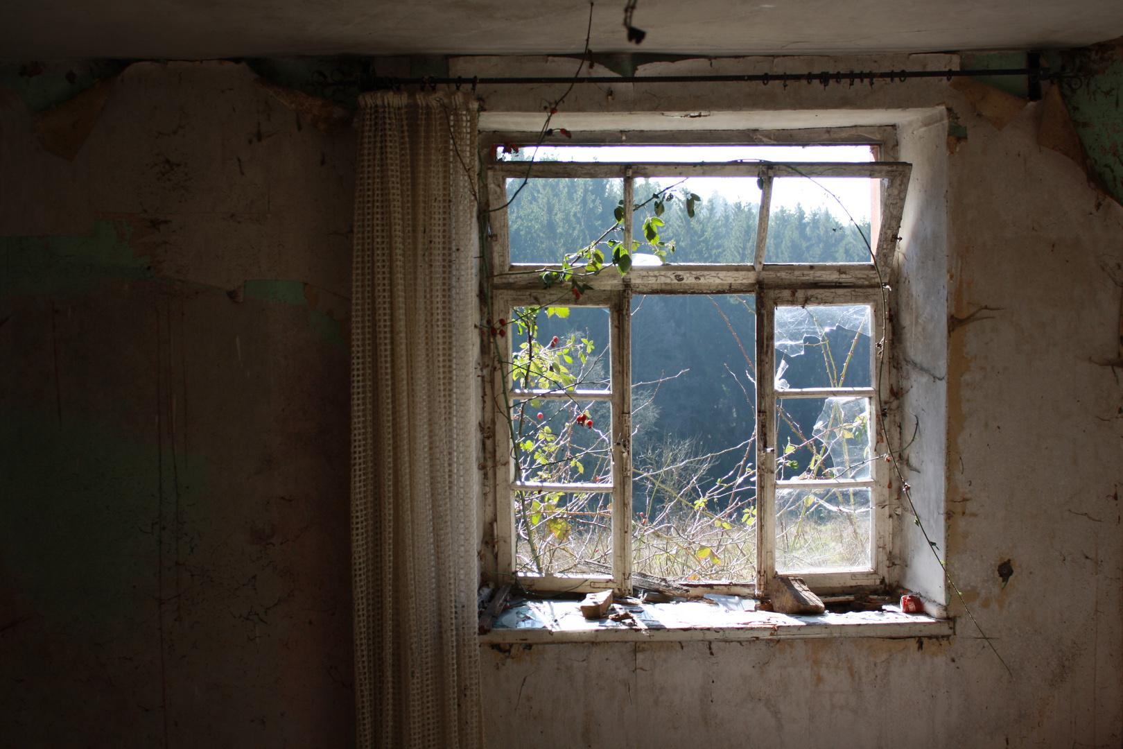 Fenster zur Natur