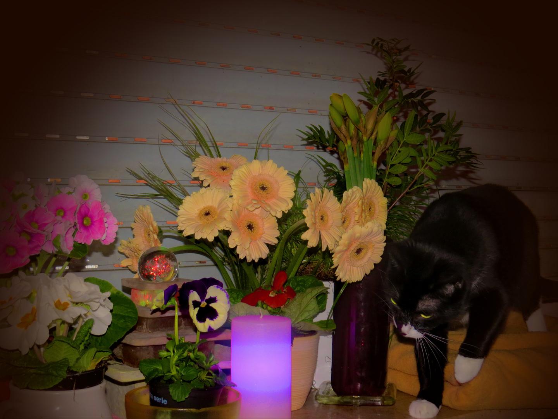 Fensterbank - Minka auf der Suche nach Katzengras...