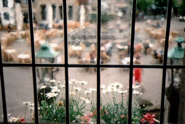 Fensterblick...