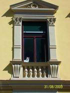 Fenstergucker :)