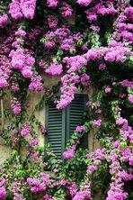 Fensterladen in Sirmione