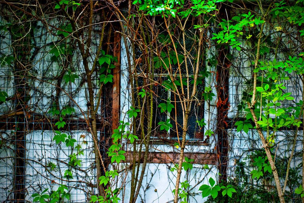 Fensterputzer sucht Gärtner