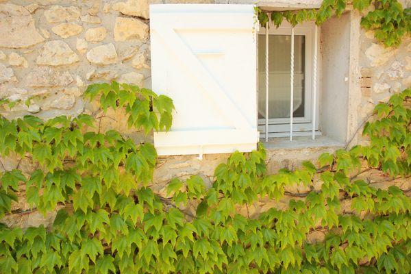 fenêtre sur la vigne