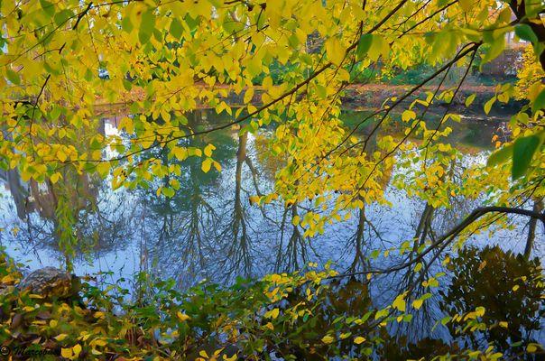 Fenêtre sur l'étang