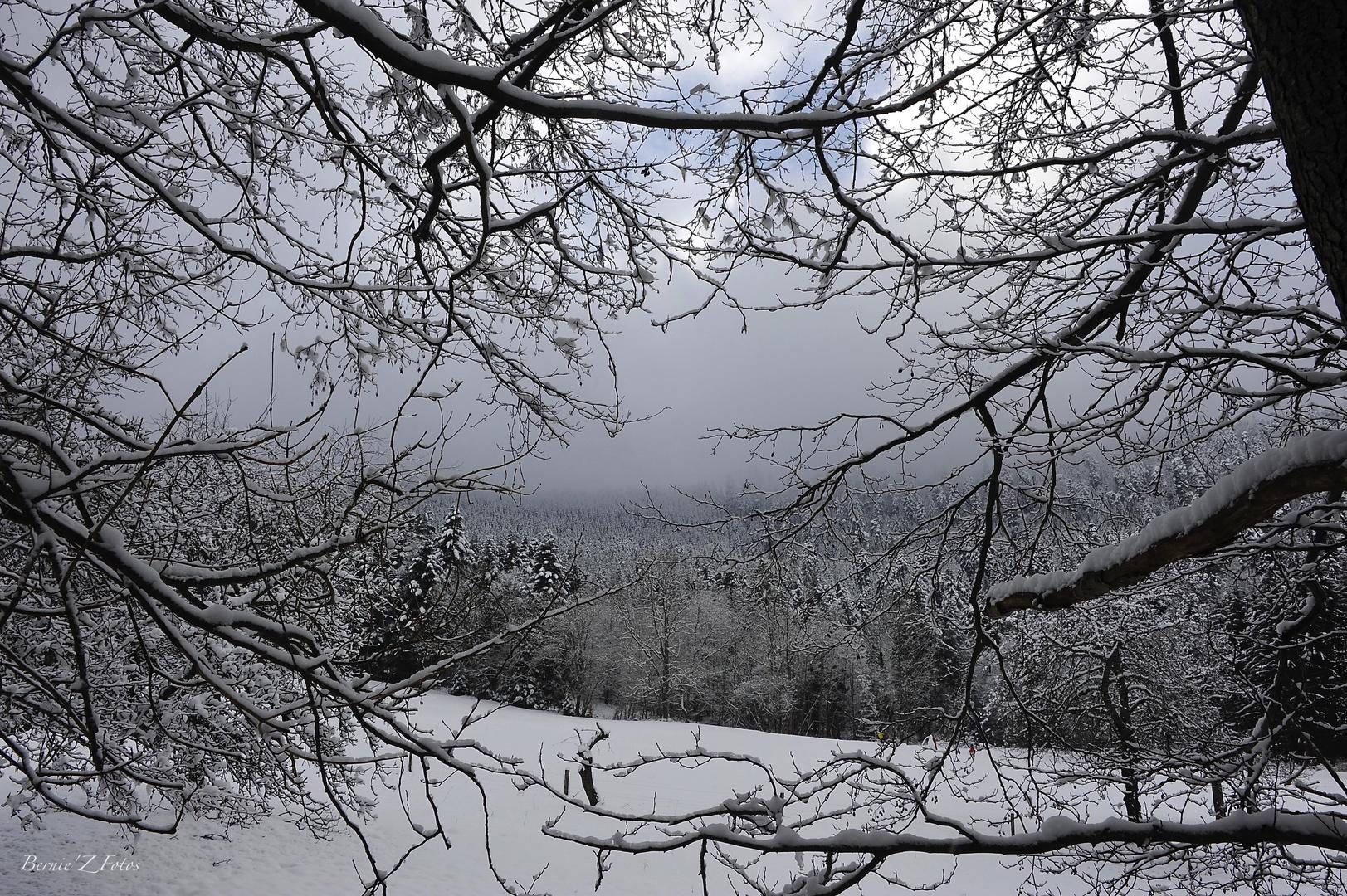 Fenêtre sur Vosges