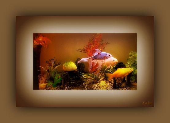 Fenêtre sur.............mon aquarium