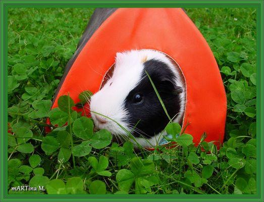 Ferien im Einschweinzelt (mit Gedicht)