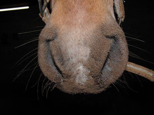 Ferkel Pferd