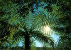 Fern Tree - Farnbaum