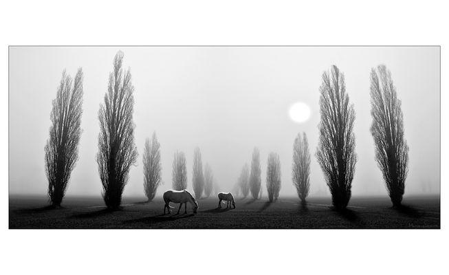 Ferrara Lands