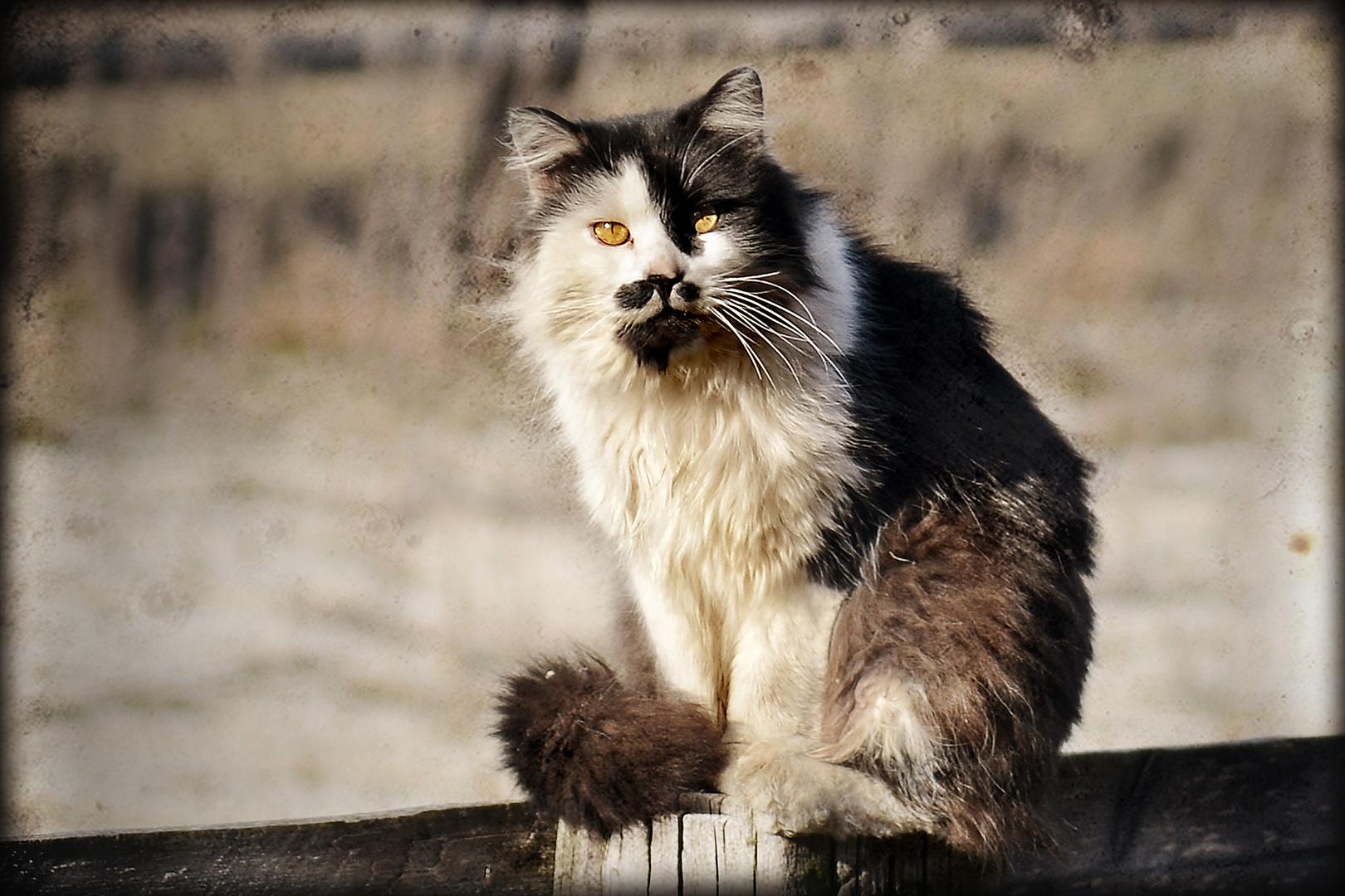 fesche Katz'