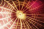 Festbeleuchtung bei Frau Spinne