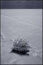 Festgetrockneter Busch im Salzsee / Australien