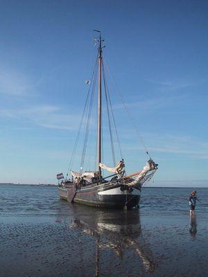 Festina Lente beim Trockendoggen im Wattenmeer (NL)