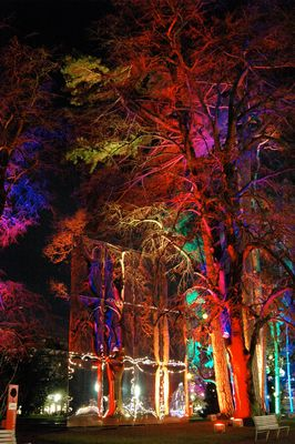 Festival Arbres en Fête, Genève