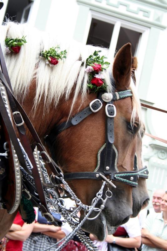 Festzugspferdl