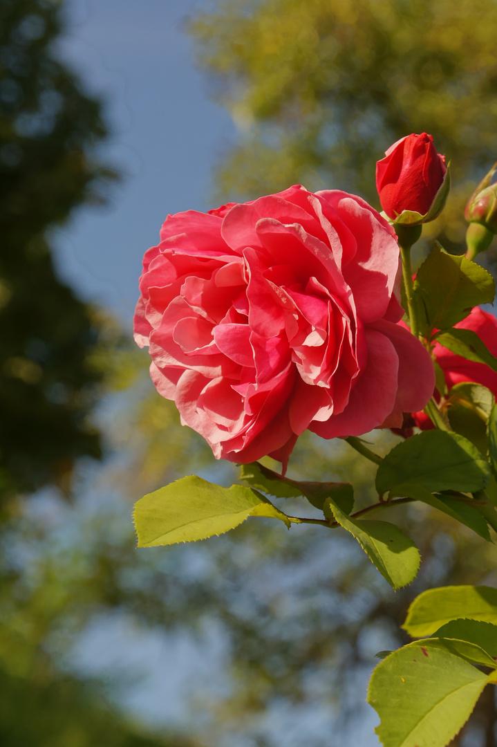 Fetish 'n Roses #4