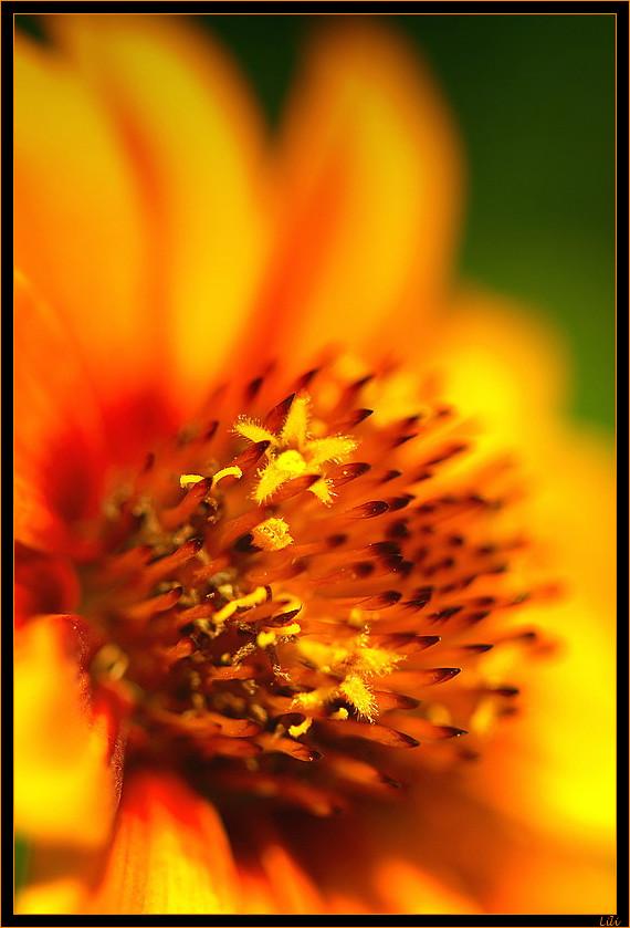 feu floral