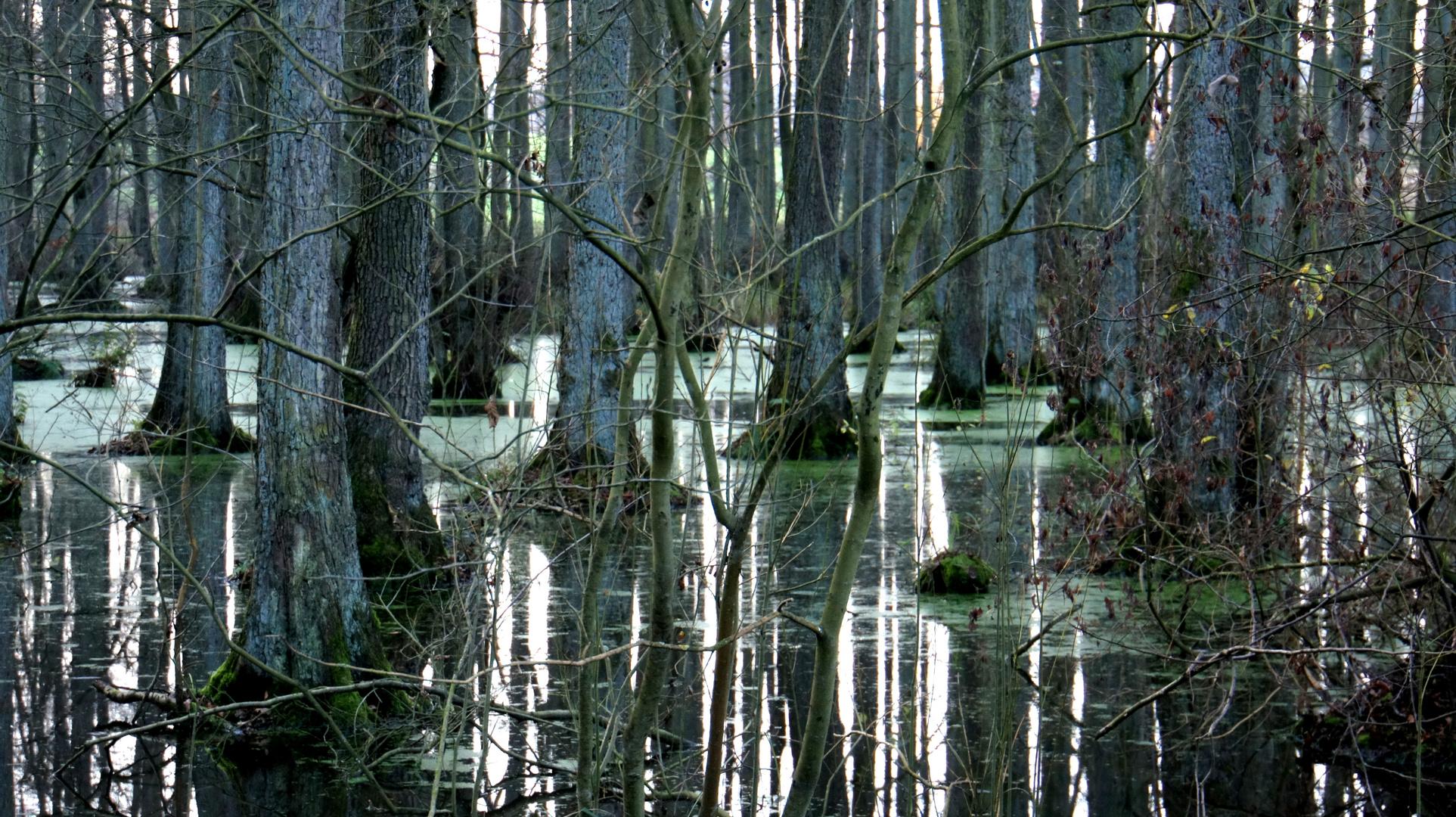 Feuchter Wald in monochrom