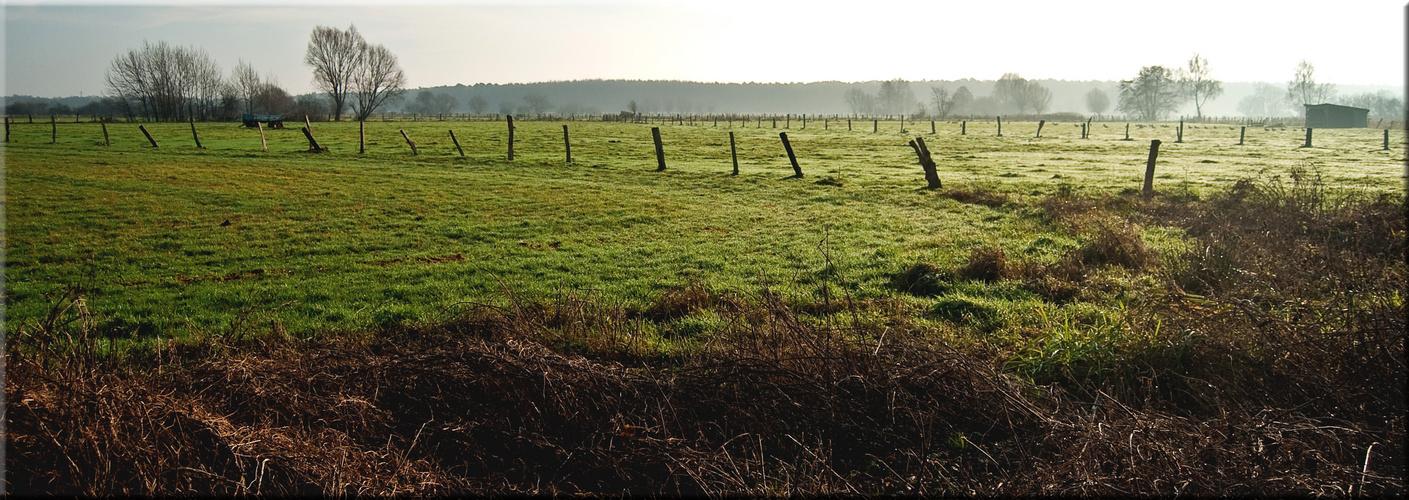 Feuchtwiesen im Steinhuder Ostenmeer