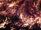 Feuer hautnah