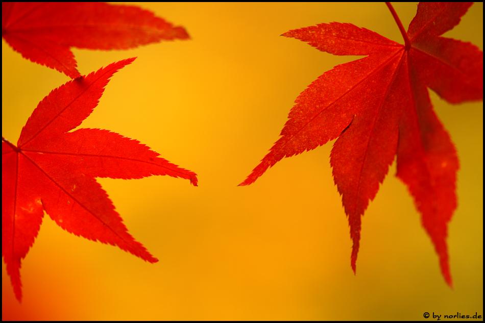 Feuer-Herbst