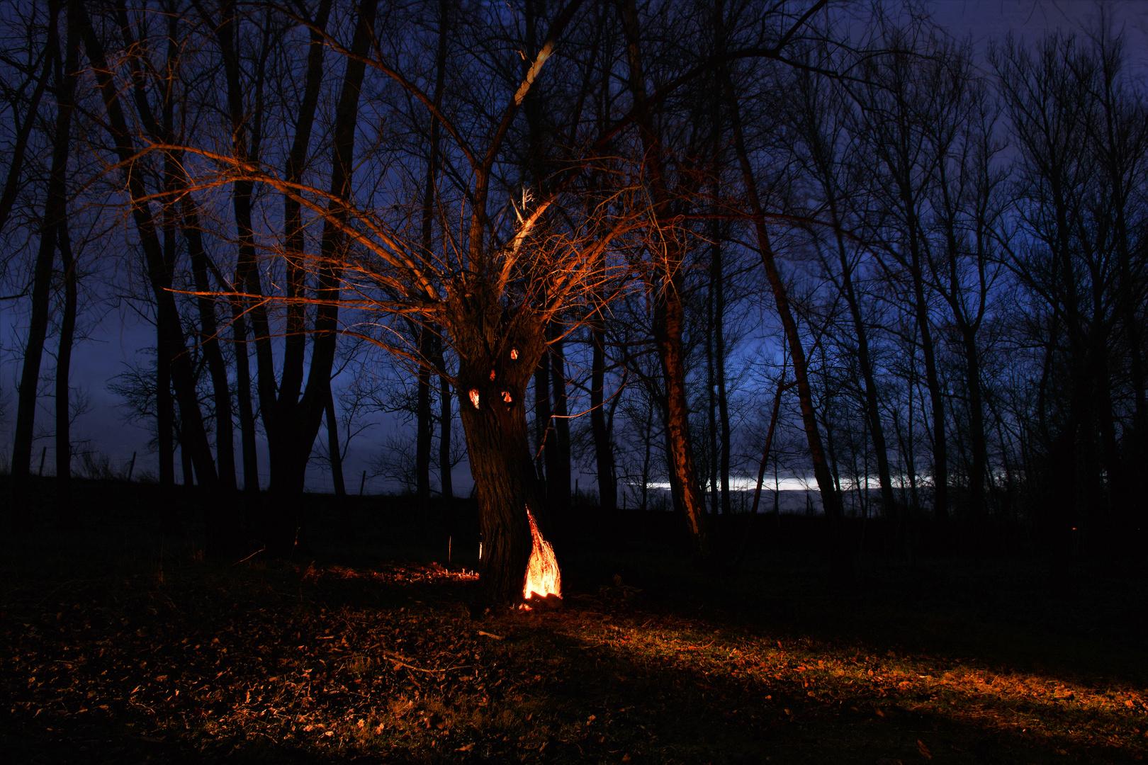 Feuer im Baum