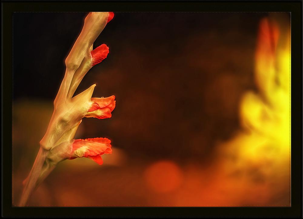 feuer und flamme ...