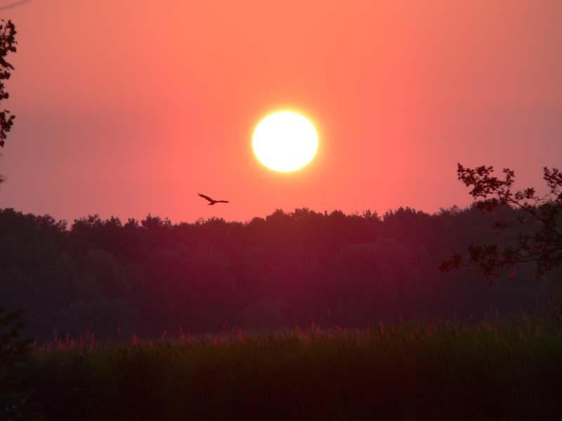 Feuerball mit Vogel