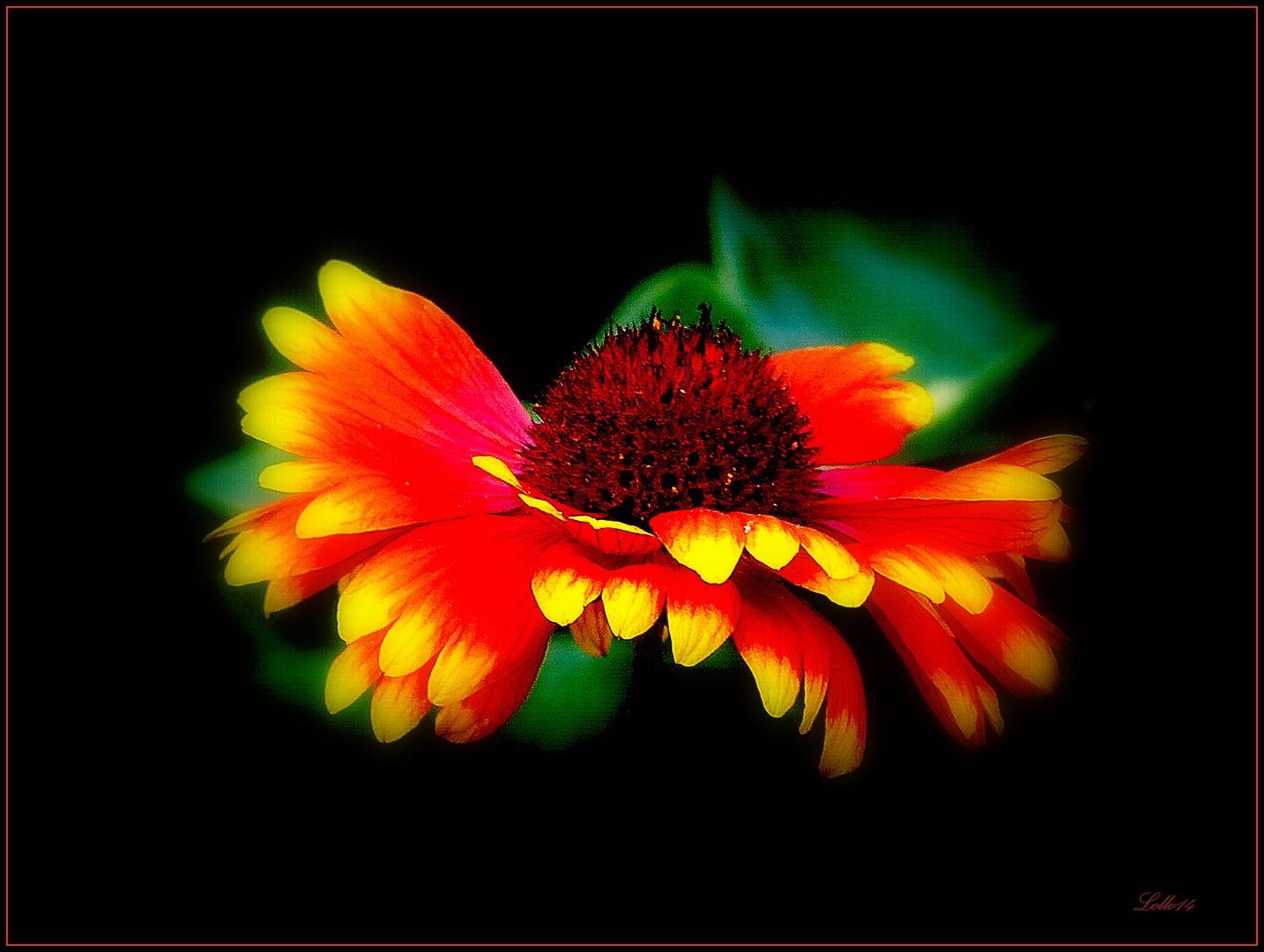 Feuerblume ...