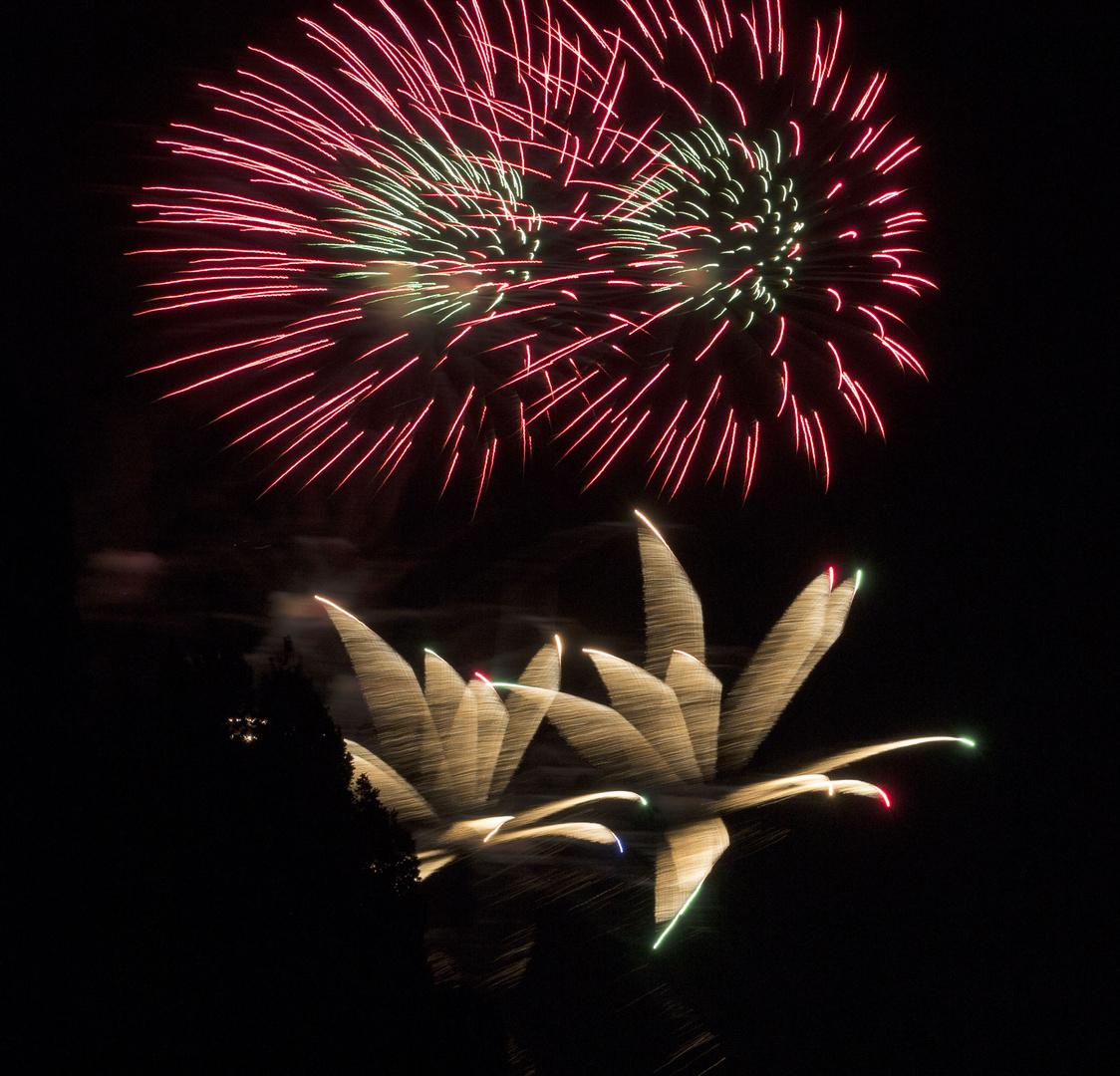 Feuerblumen Rot