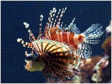 Zoo: Fische