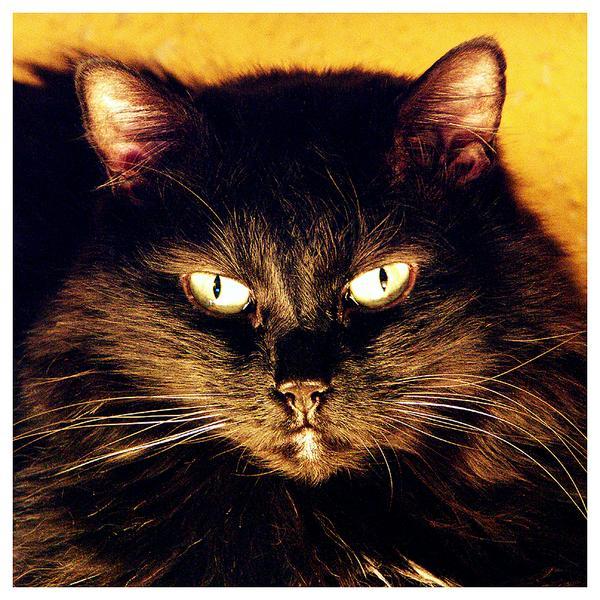 Feuerkatze | Katzenfeuer