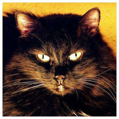 Feuerkatze   Katzenfeuer