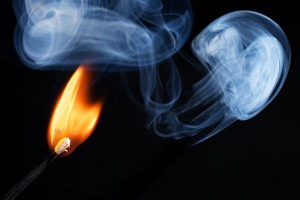 Feuerqualle