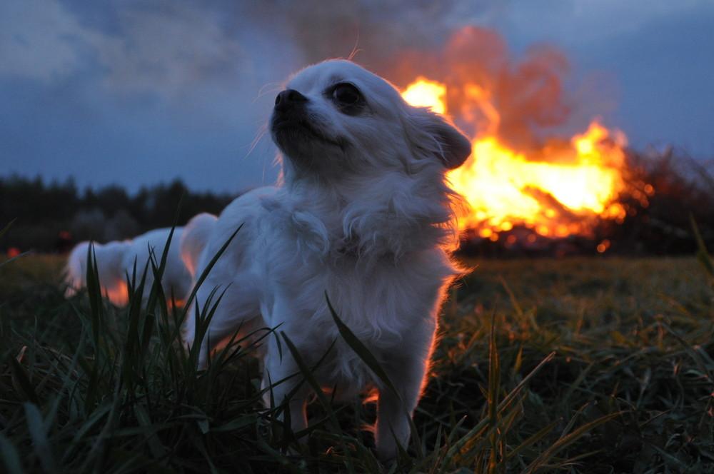 Feuerteufel