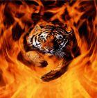 Feuer_Tiger