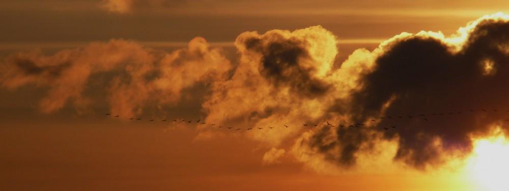 Feuervögel