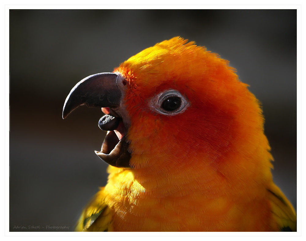 Feuervogel...