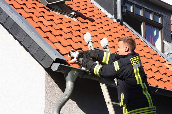 Feuerwehr rettet Katze aus Dachrinne
