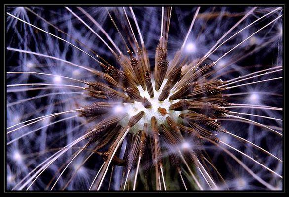 Feuerwerk der Natur