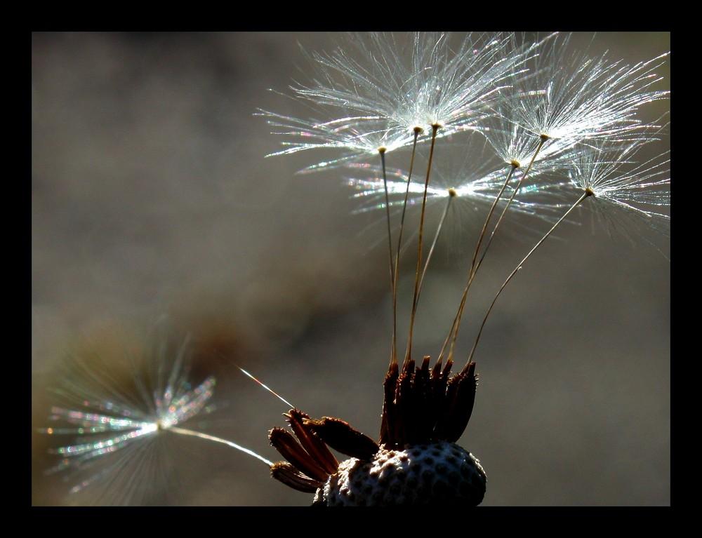 Feuerwerk in silber