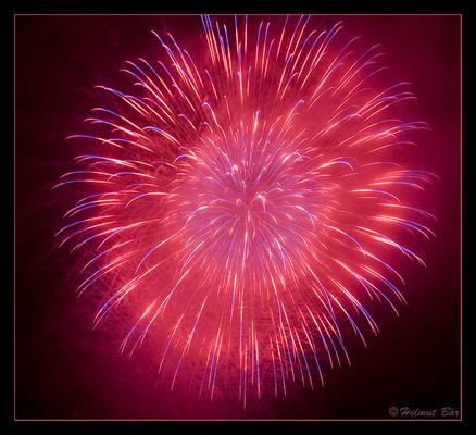 Feuerwerk-Rose
