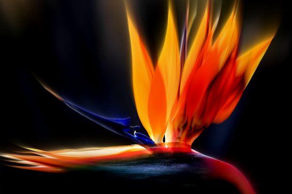 Feuerwerk Strelizie