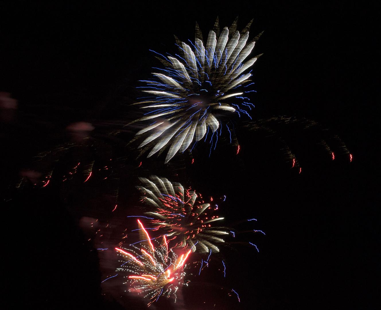 Feuerwerkblume
