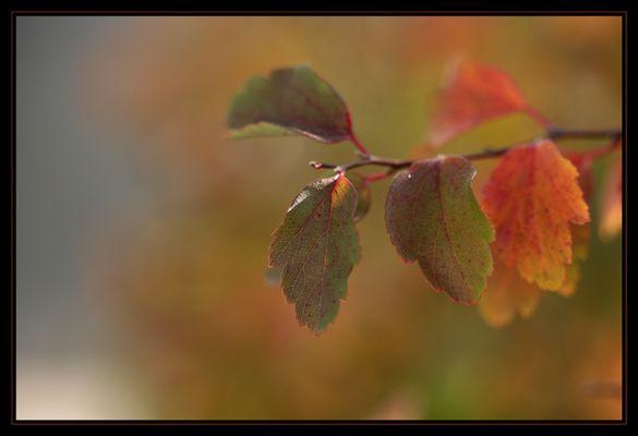 Feuillage d automne...