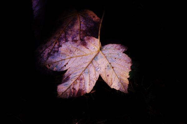 feuille d automne